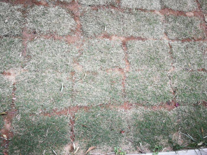 芝生 隙間