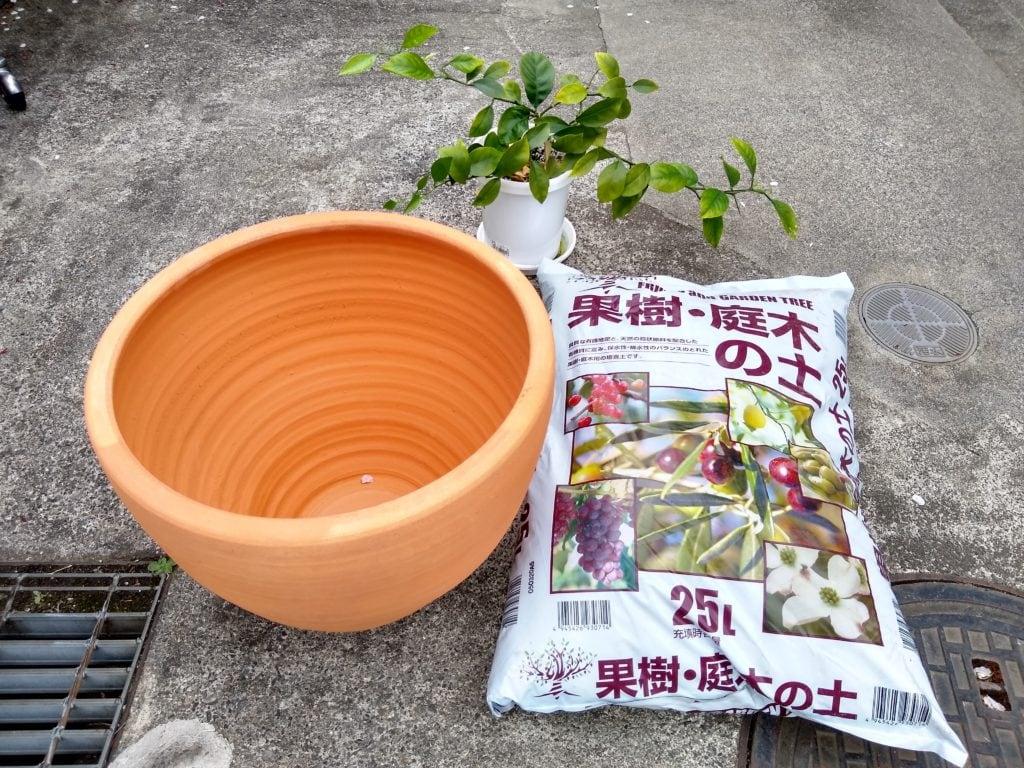 みかん 種から 鉢植え