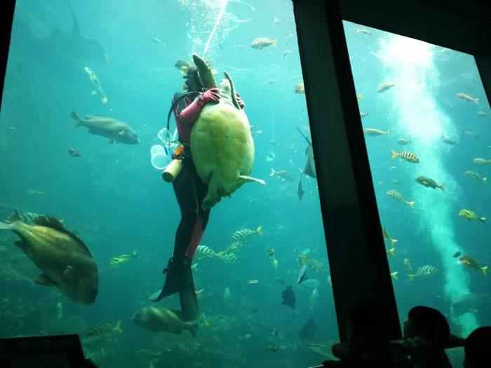 下田海中水族館の巨大水槽でショー