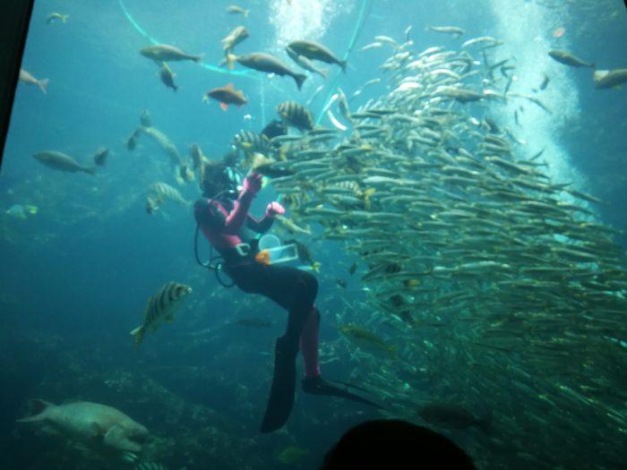 巨大水槽でのえさやり 下田海中水族館