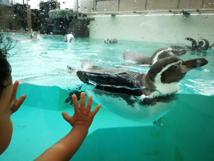 ペンギンが近い 下田海中水族館