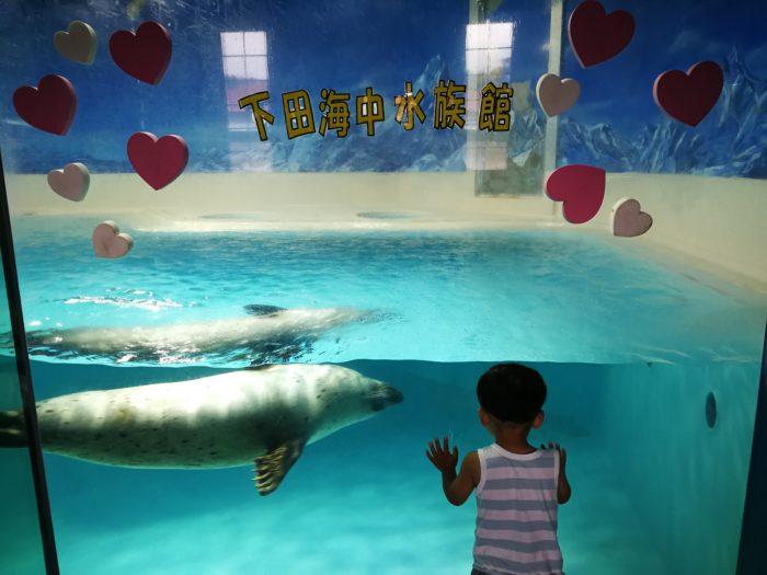 アザラシと下田海中水族館