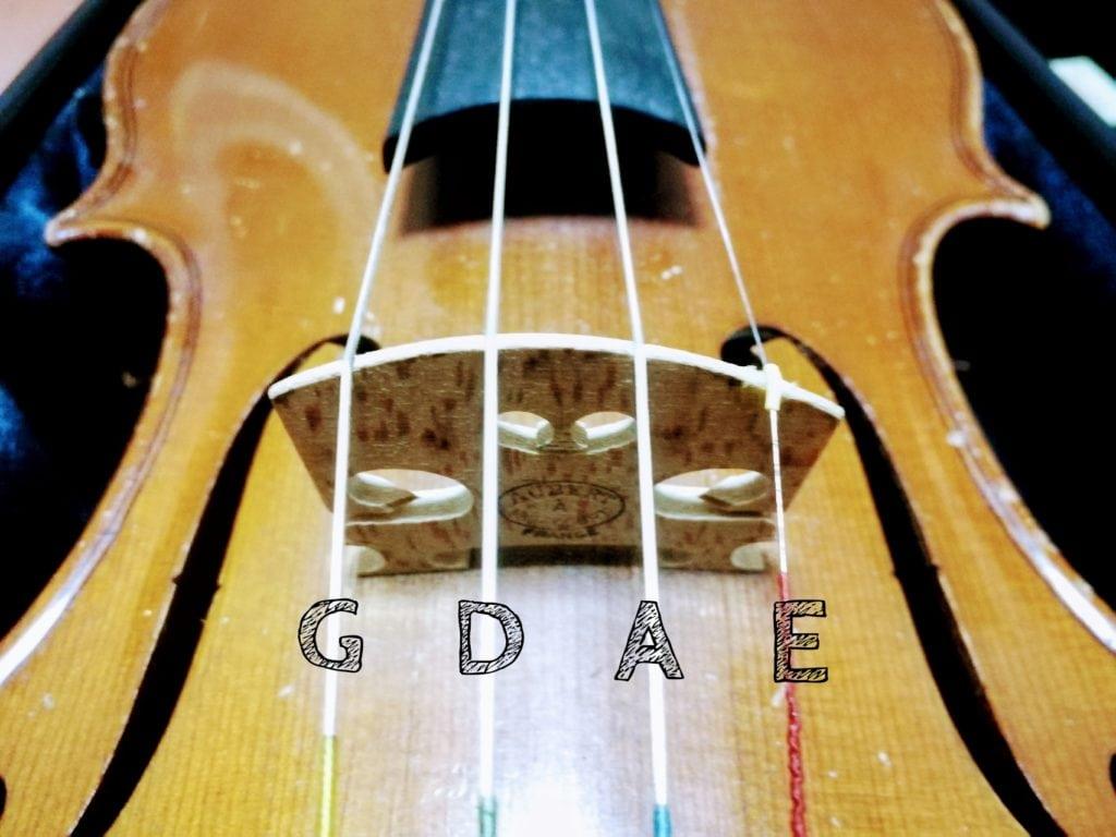 バイオリン 弦