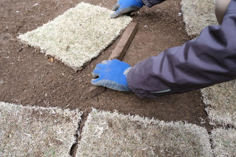 芝生貼り替え作業