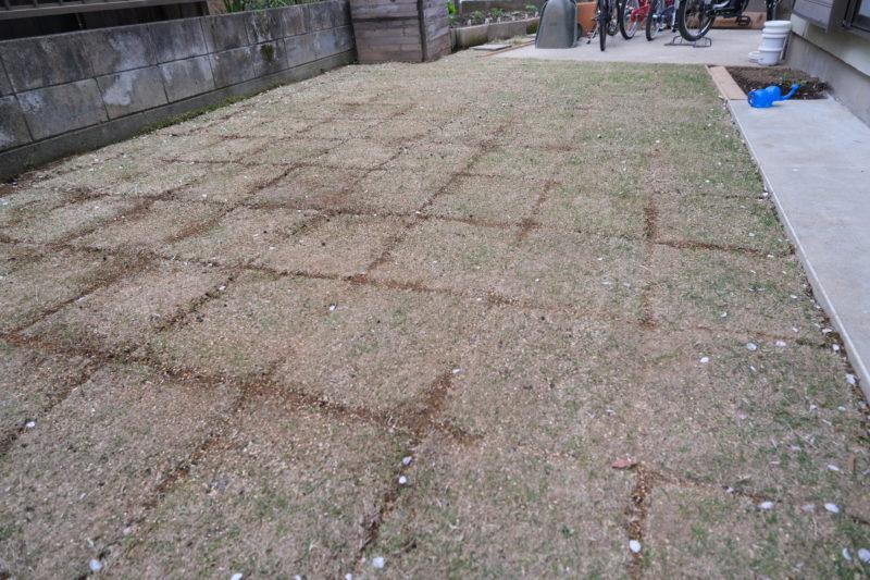 TM9 1週間 芝生