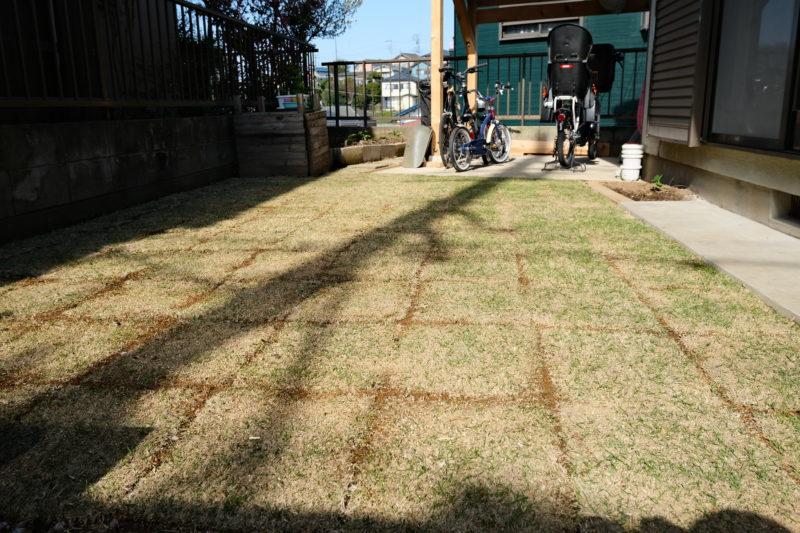 TM9 芝生の成長 2週間