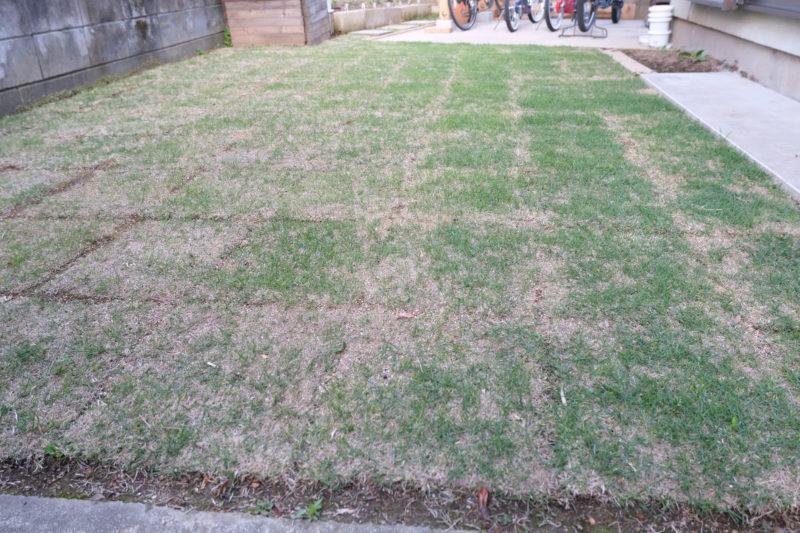 TM9 芝生 一ヶ月
